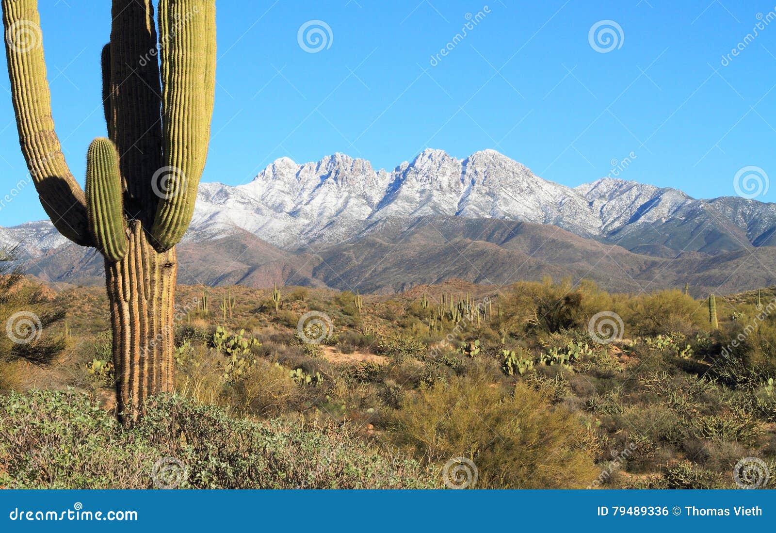 美国,亚利桑那:下雪在四个峰顶/冬天在Sonoran沙漠