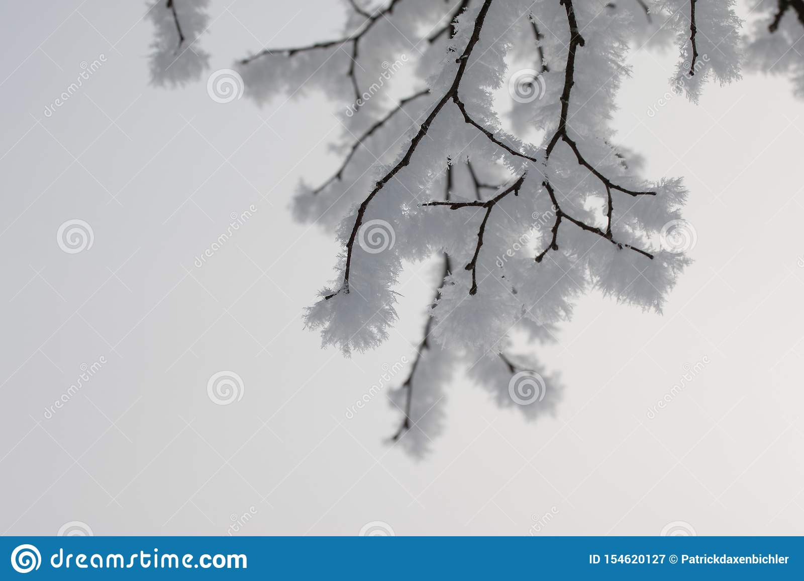 美好的冬天风景:冷淡的树在1月,奥地利 r
