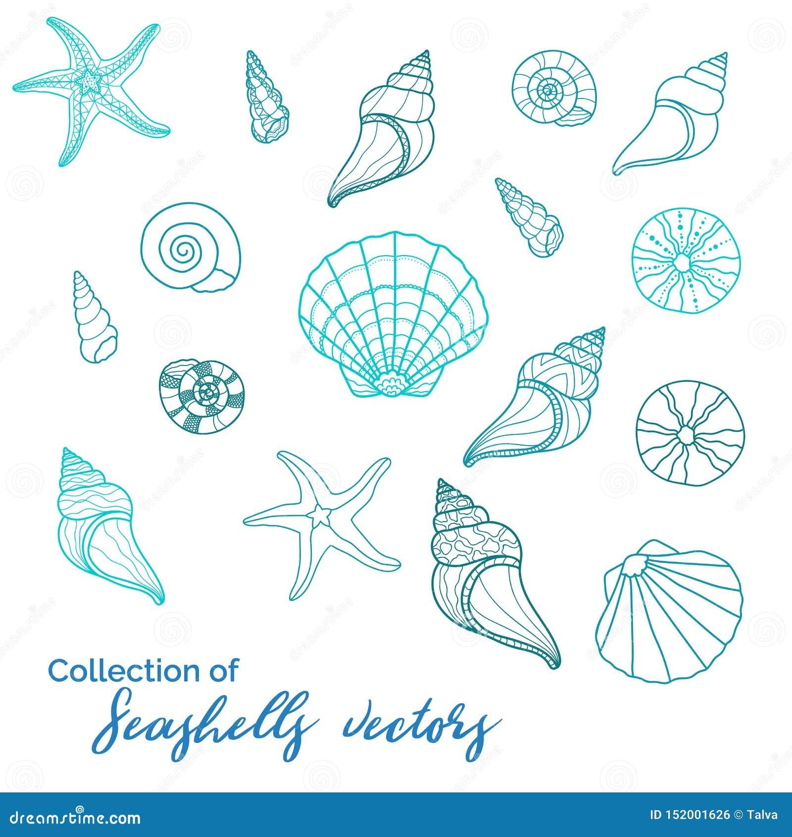 美好的各种各样的蛤蜊的sealife s,汇集,海星、蜗牛、野孩子-伟大为水中和miritim设计,时尚