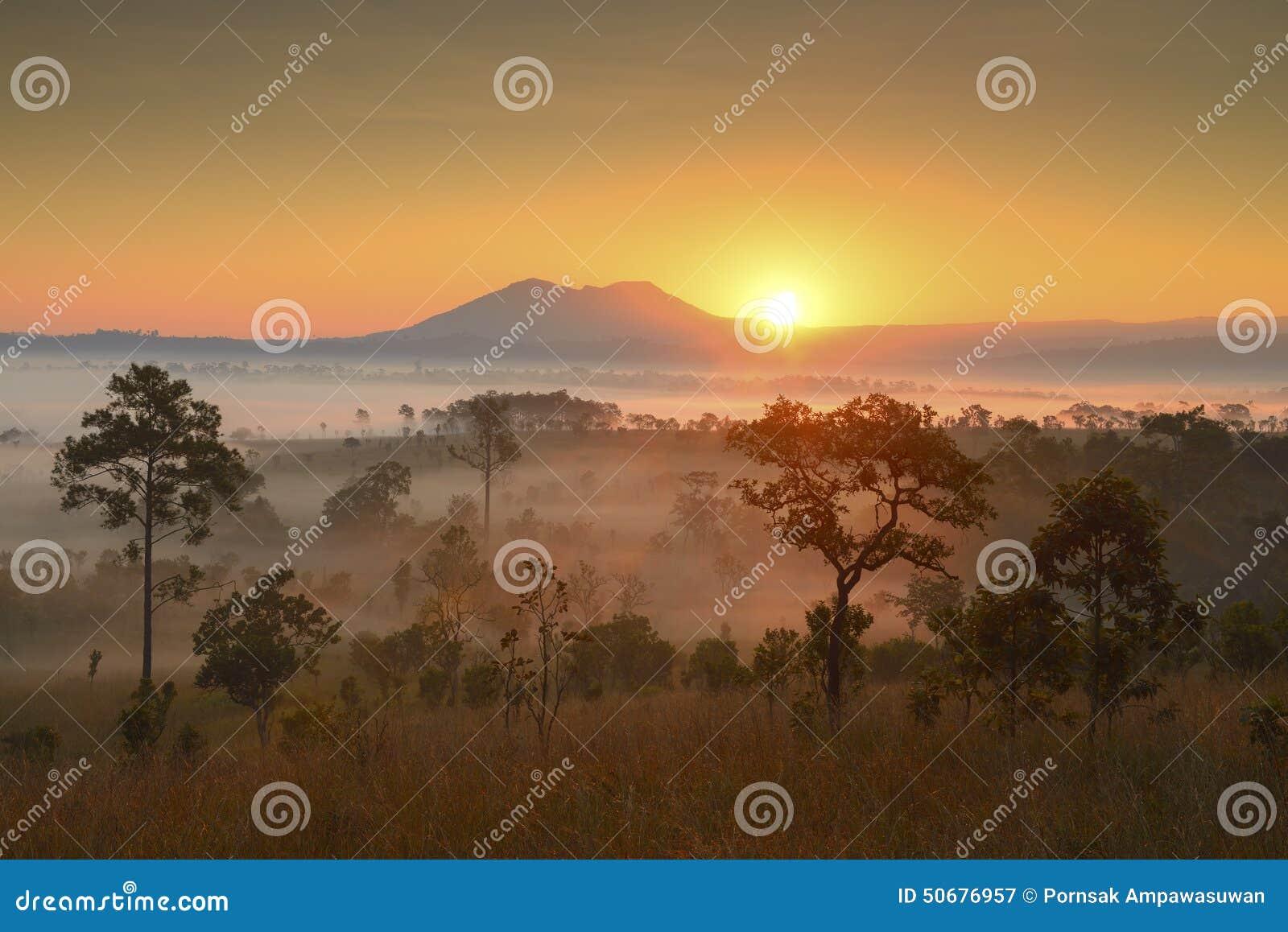 Download 美好的新观点桐树萨朗Luang,泰国 库存图片. 图片 包括有 风景, 森林, 本质, 地产, 季节, 绿色 - 50676957