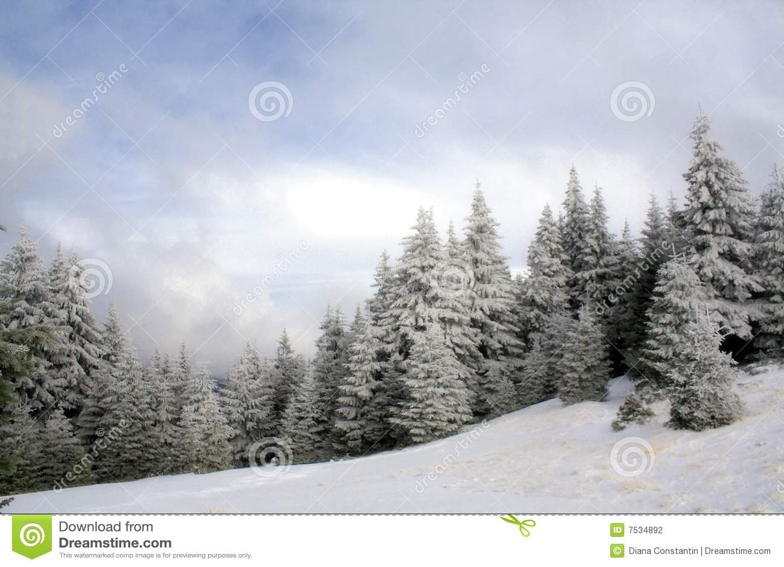 美好的日冬天