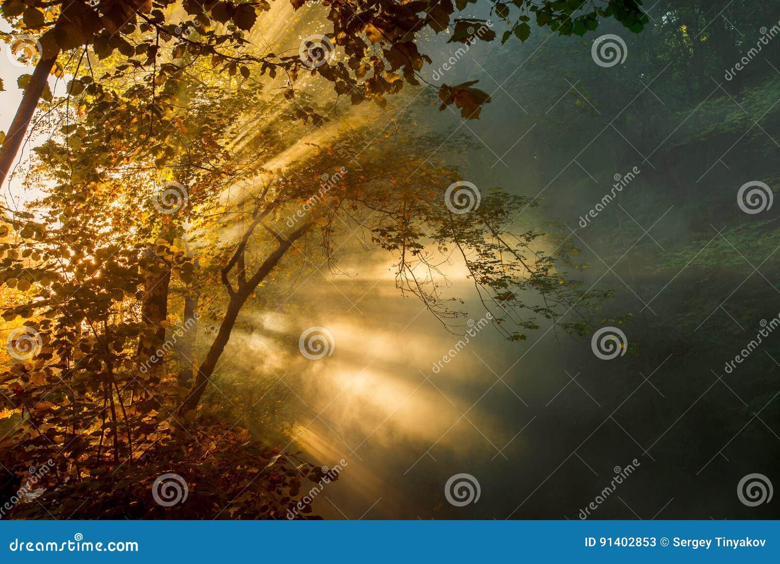 美好的明亮的光束通过早晨薄雾和树叶子做他们的方式 美丽如画的横向