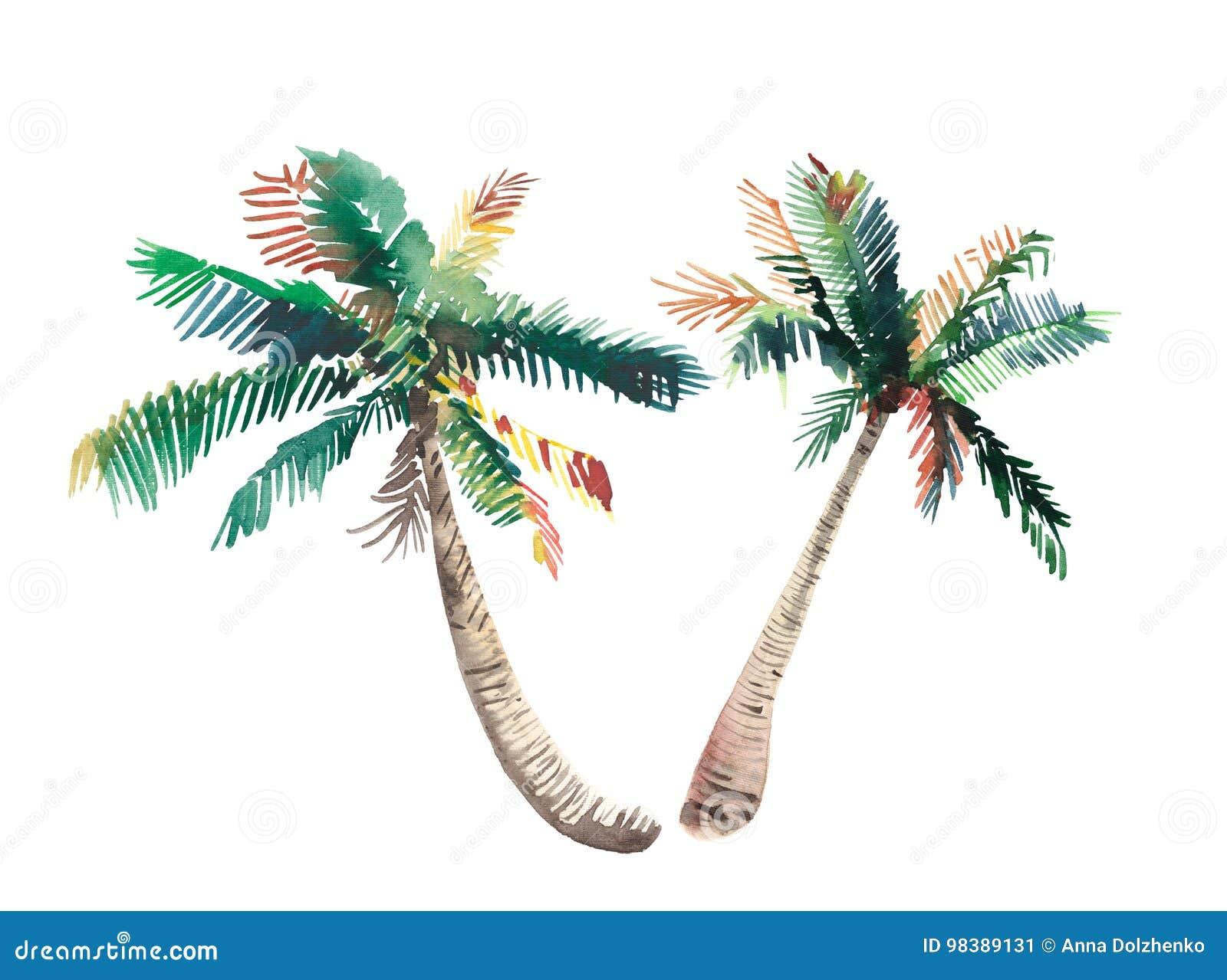 美好的明亮的逗人喜爱的绿色热带可爱的美妙的夏威夷花卉草本夏天两棕榈树水彩手剪影