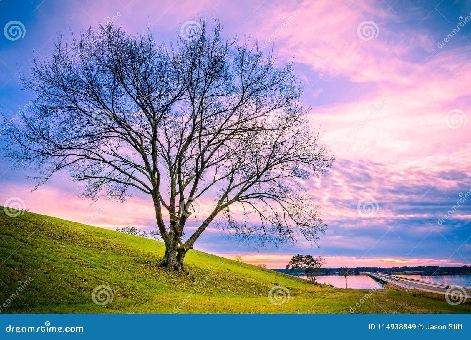 美好的树日落