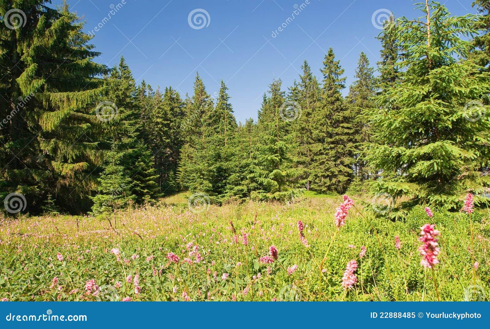 美好的森林夏天图片