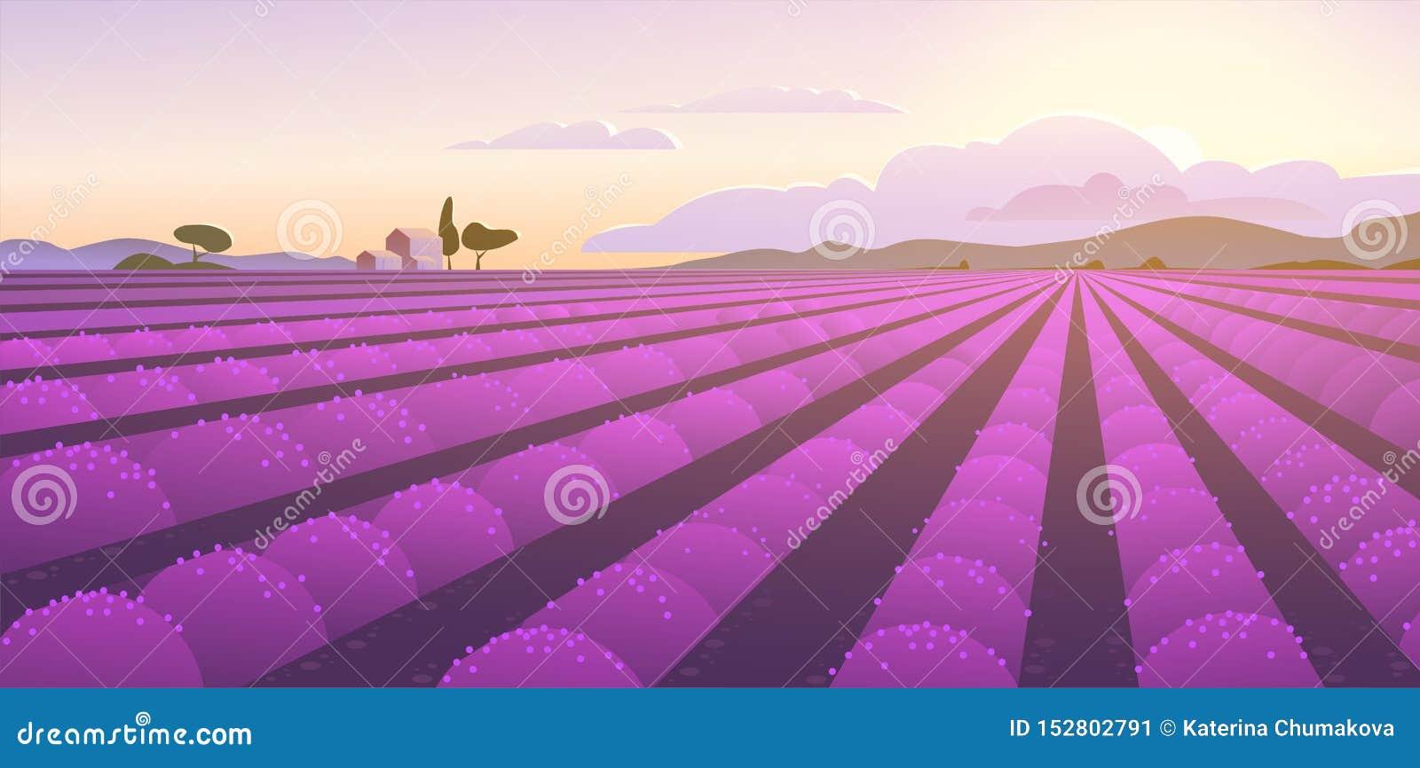 美好的淡紫色领域的传染媒介平的风景例证在日出的:天空,山,舒适房子,淡紫色