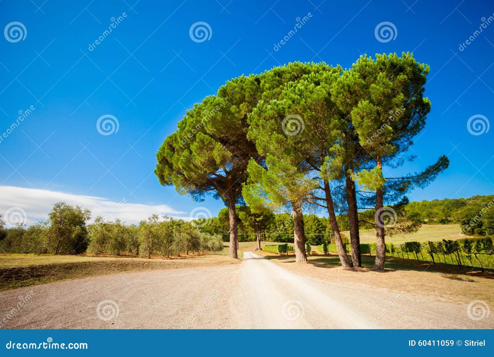 美好的秋天托斯卡纳葡萄园视图