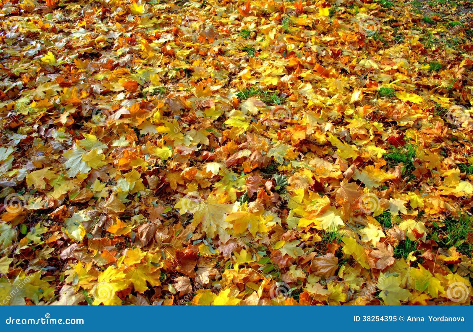 美好的秋天落的叶子地毯