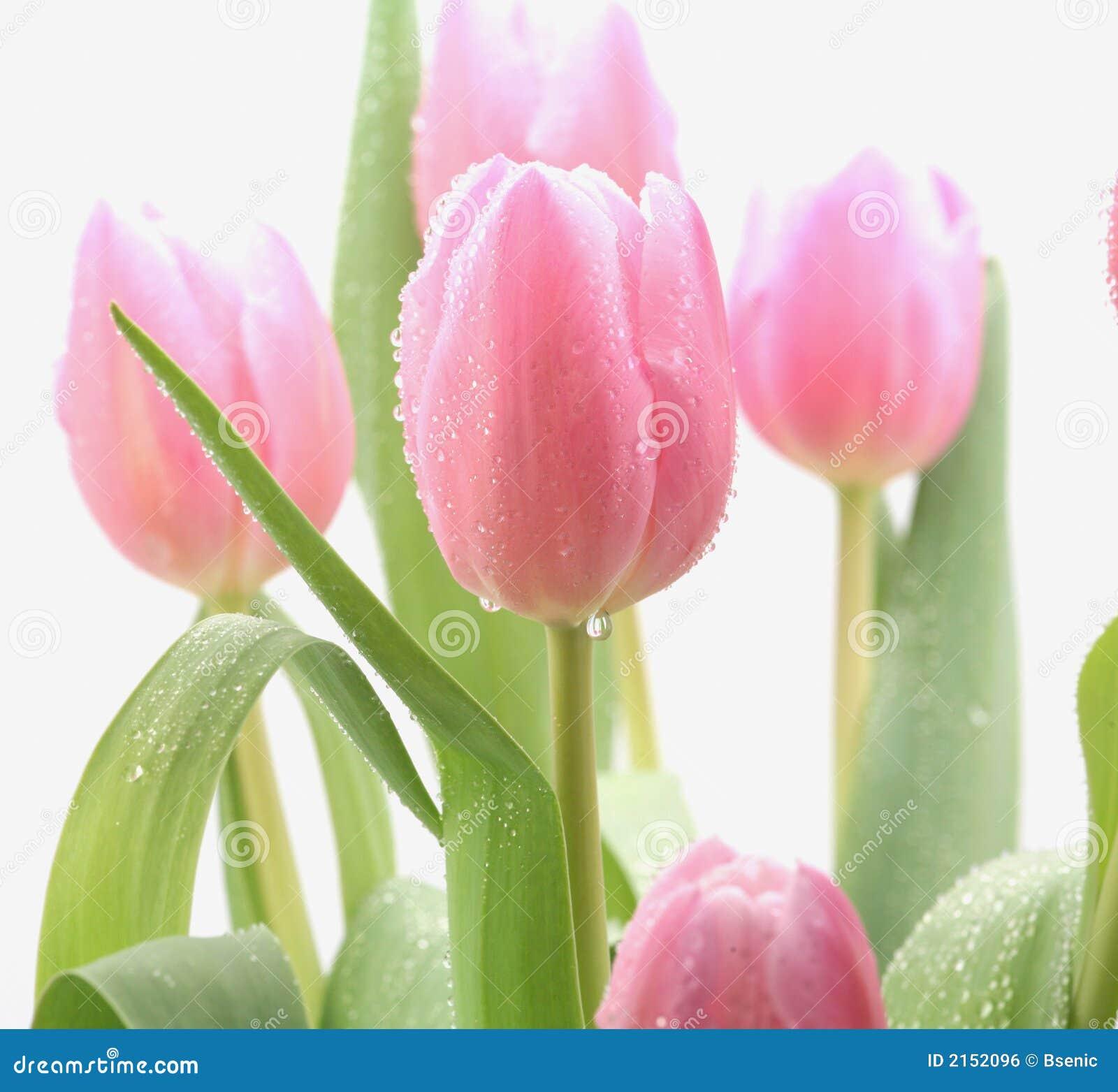美好的花粉红色