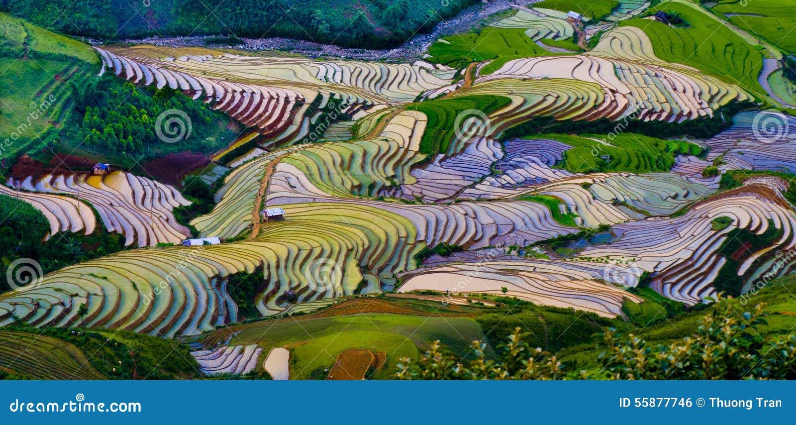 美好的露台的米领域在Mu Cang柴,越南
