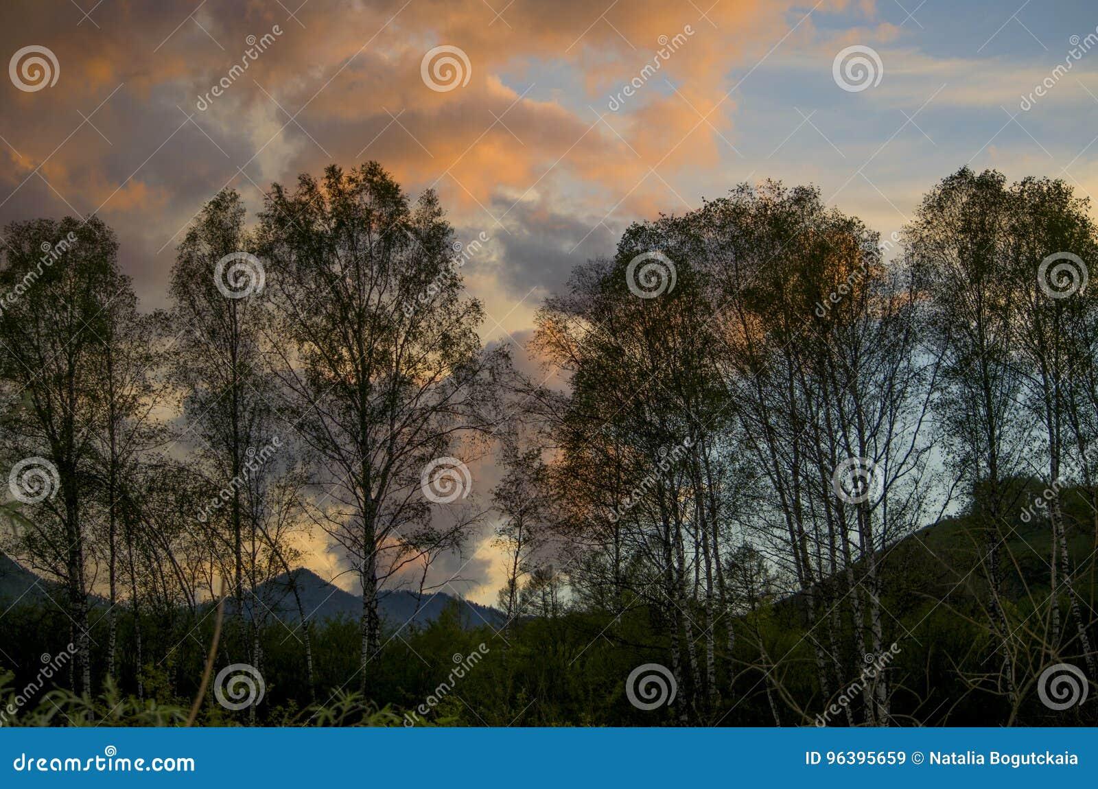 美好的风景在山的日落