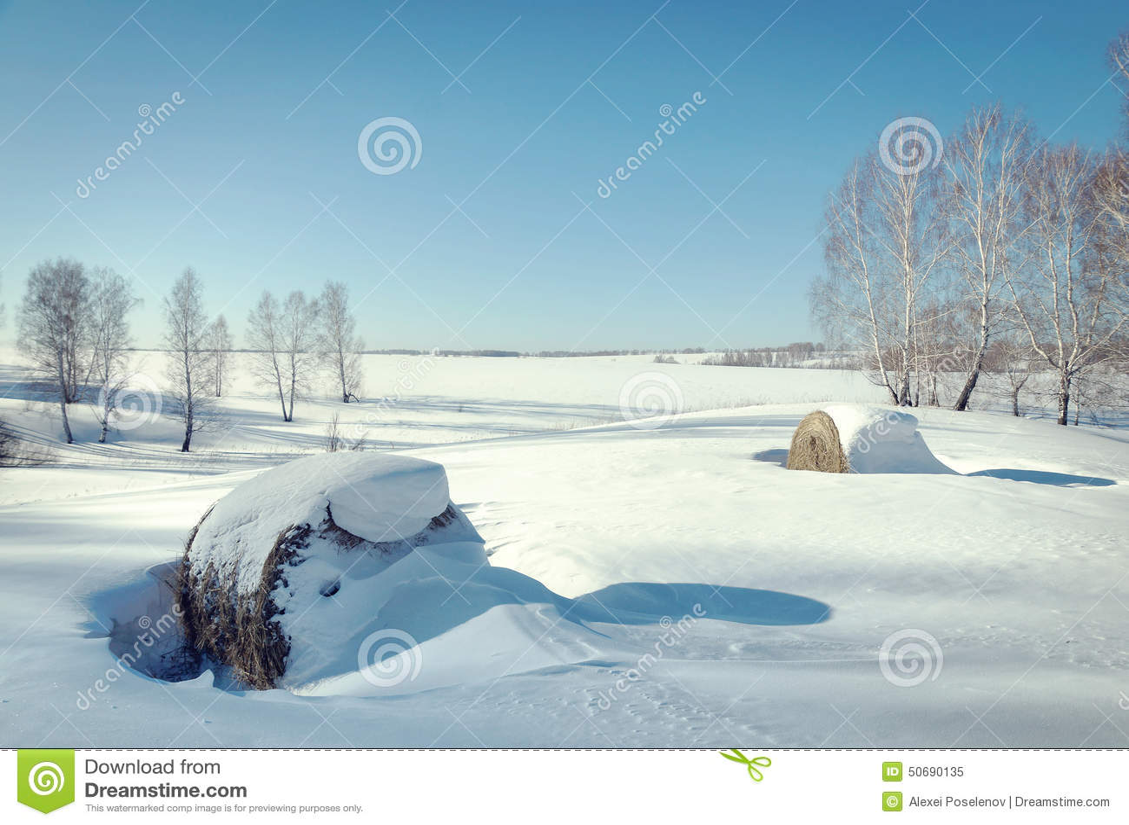 Download 美好的晴朗的冬天风景 干草劳斯在雪的 库存图片. 图片 包括有 照亮, 晴朗, 结构树, beautifuler - 50690135