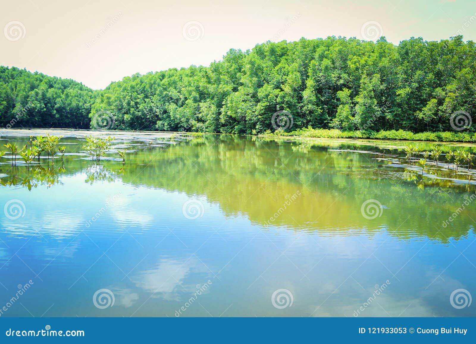美洲色�_美洲红树森林在区能gio -越南. 通过, 五颜六色.