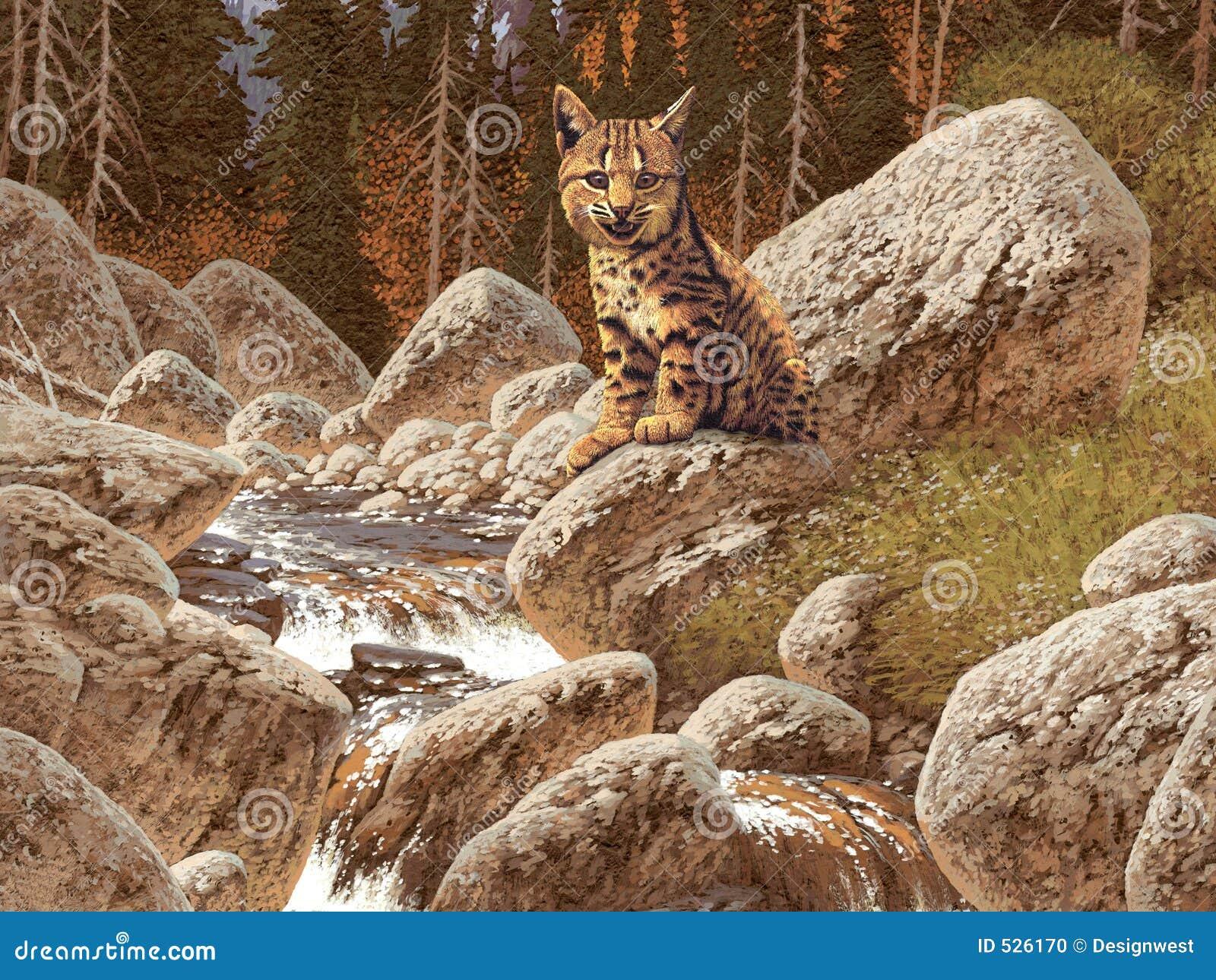 Download 美洲野猫 库存例证. 插画 包括有 杉木, 西方, 艺术, 峡谷, 原野, 通配, 西部, 敌意, 野生生物 - 526170