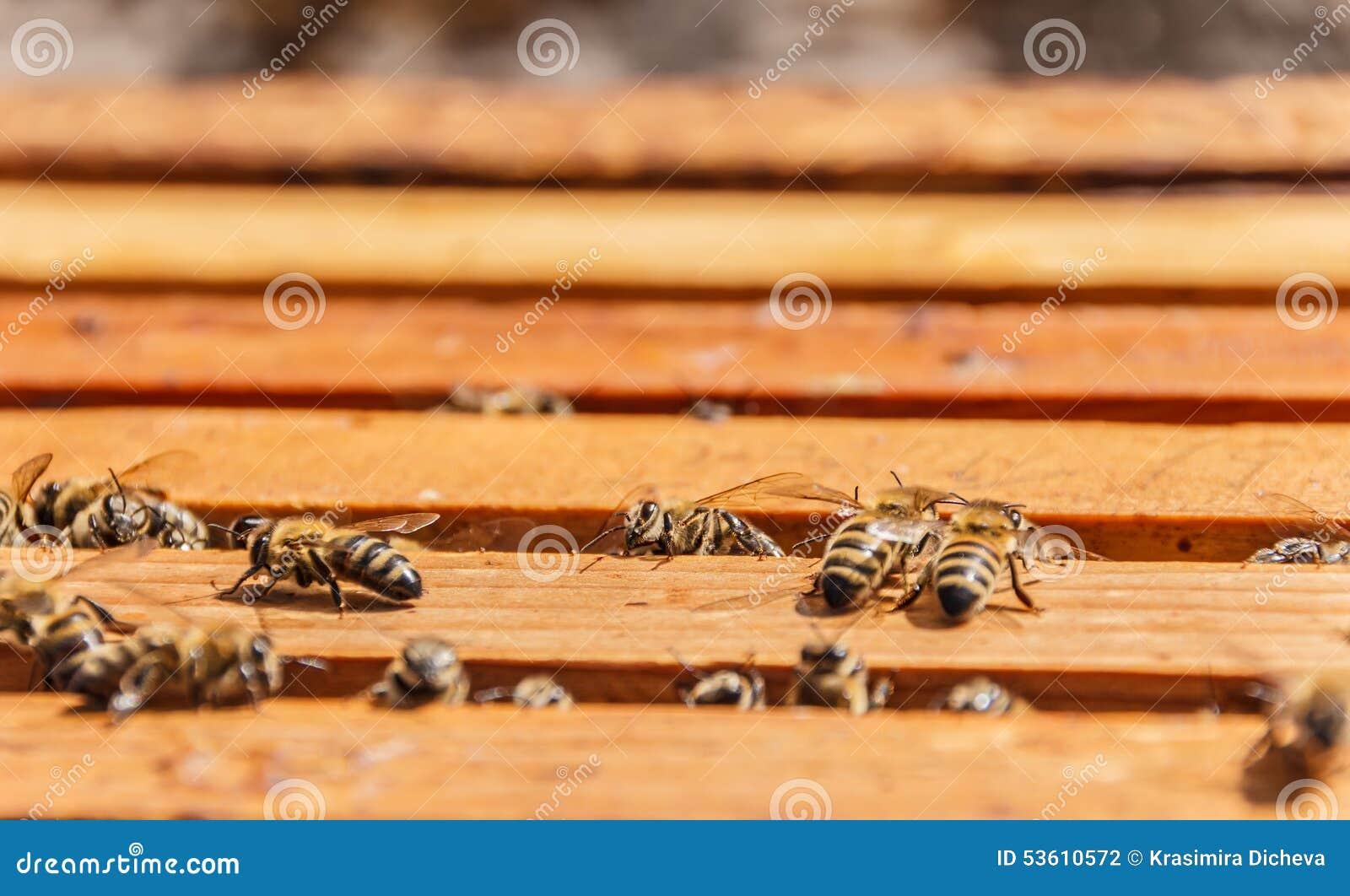 群集在框架老婆的蜂梦到老虎追怀孕的蜂窝图片
