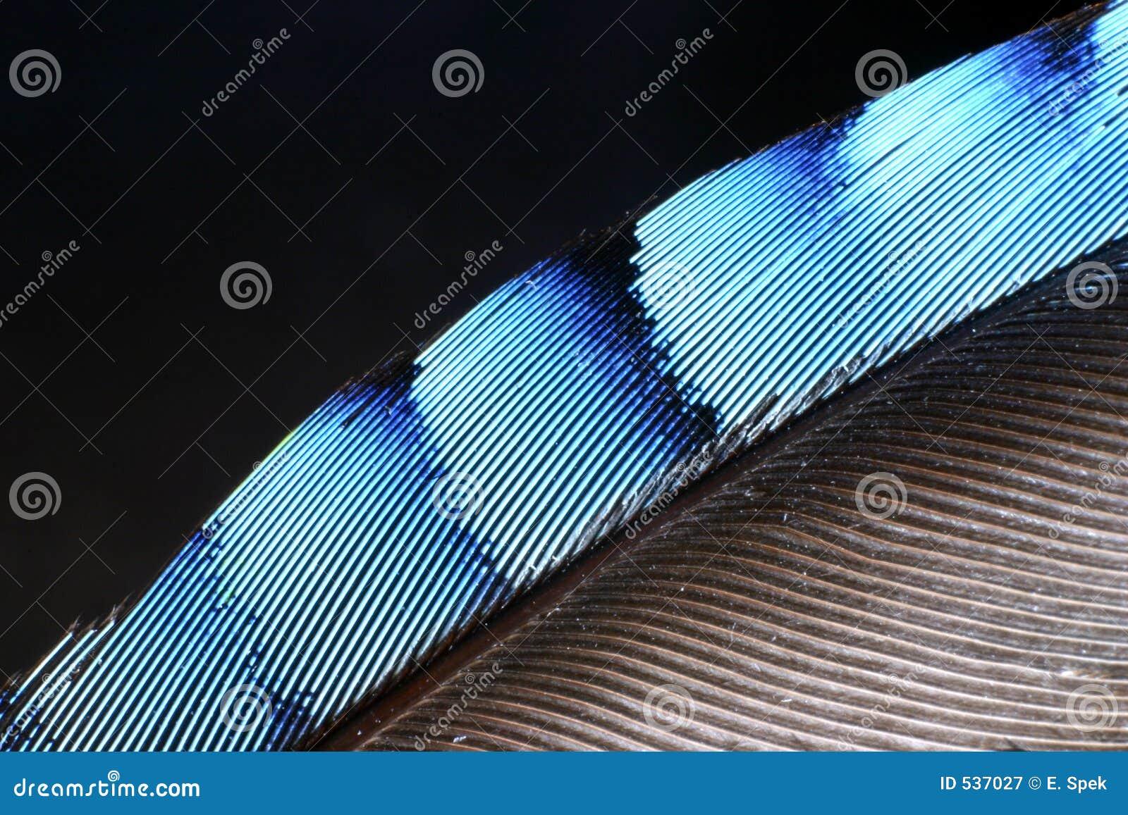Download 羽毛杰伊 库存图片. 图片 包括有 蓬松, 投反对票, 模式, 抽象, 杰伊, 双翼飞机, 特写镜头, 头发 - 537027