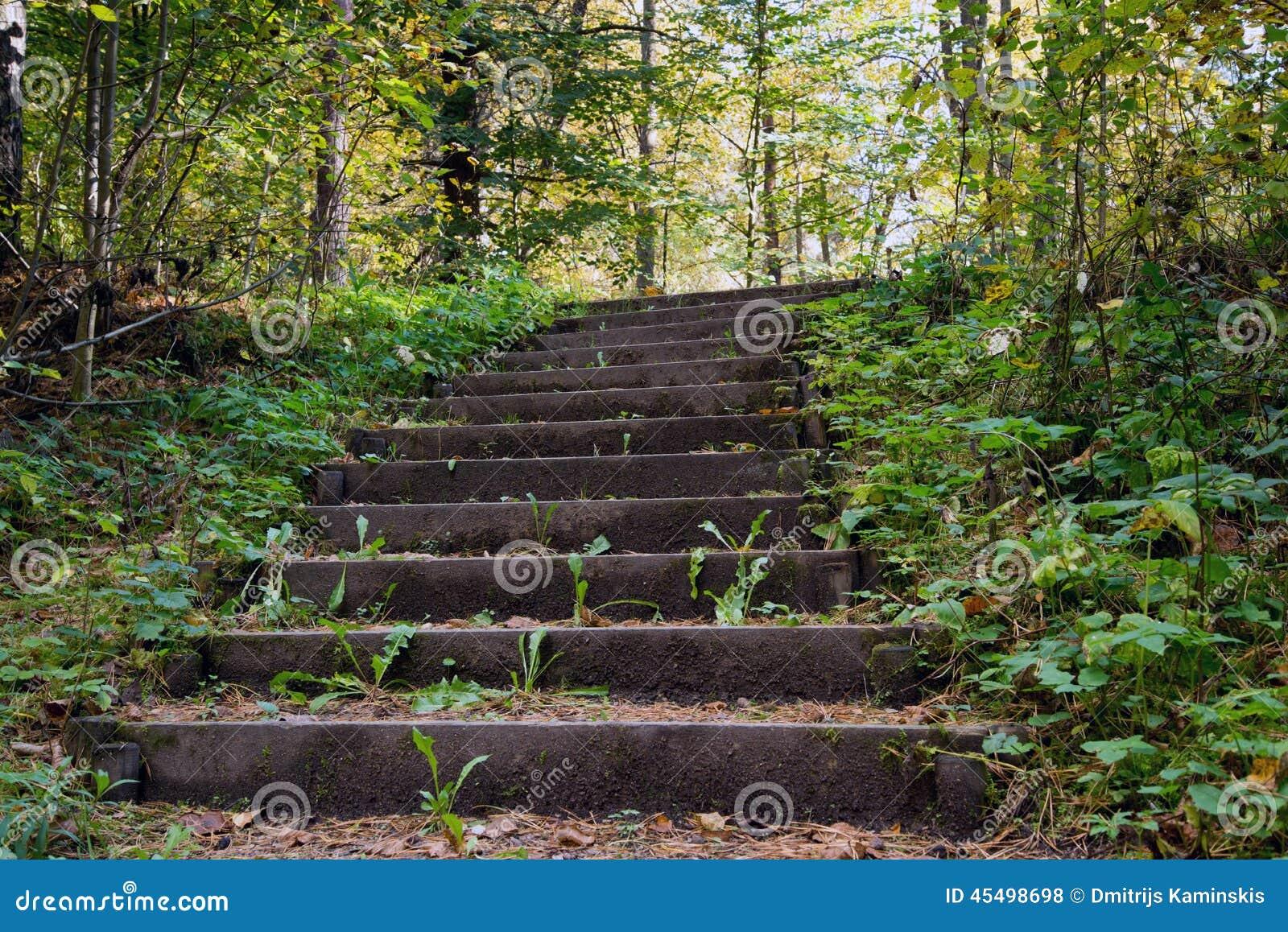 老木楼梯在森林里