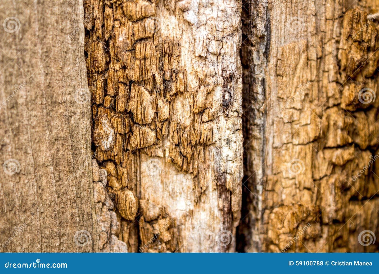 老木纹理-年迈的木篱芭