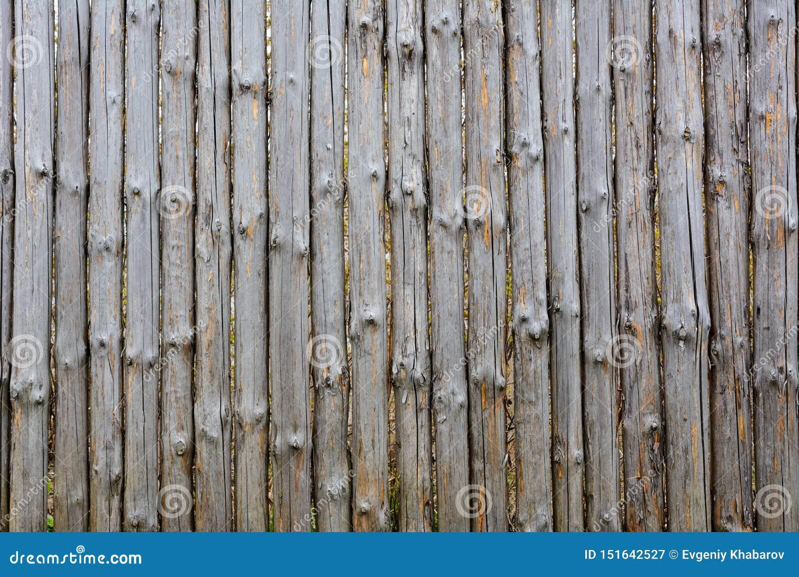 老灰色木篱芭背景纹理从整个日志的与结 破旧的篱芭