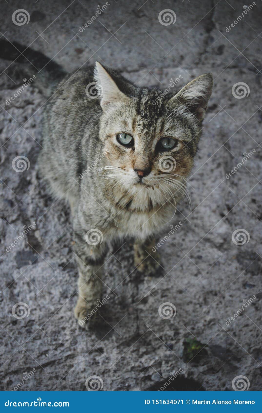 老猫似乎是病态谨慎看