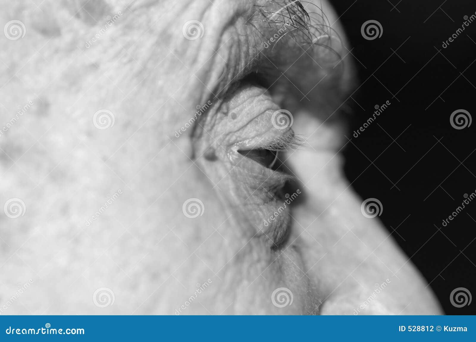 Download 老眼睛 库存照片. 图片 包括有 灰色, 表面, 部分, 实验, 疾病, spotlit, 严重, 龙舌兰, 年长 - 528812