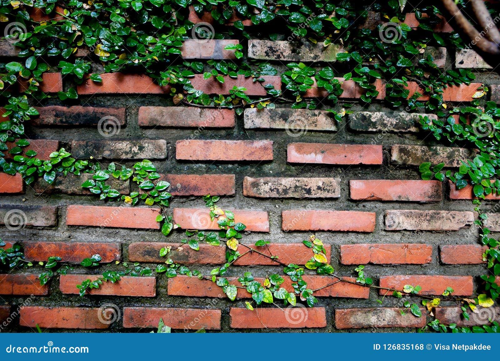 老纹理砖墙,背景