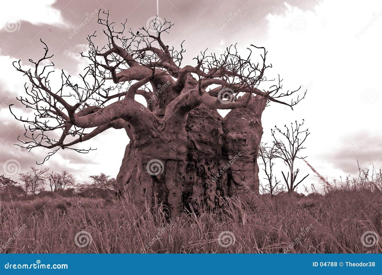 Download 老结构树 库存照片. 图片 包括有 孤独, 季节, 结构树, 天旱, 孤零零, 乌贼属, 环境 - 4788