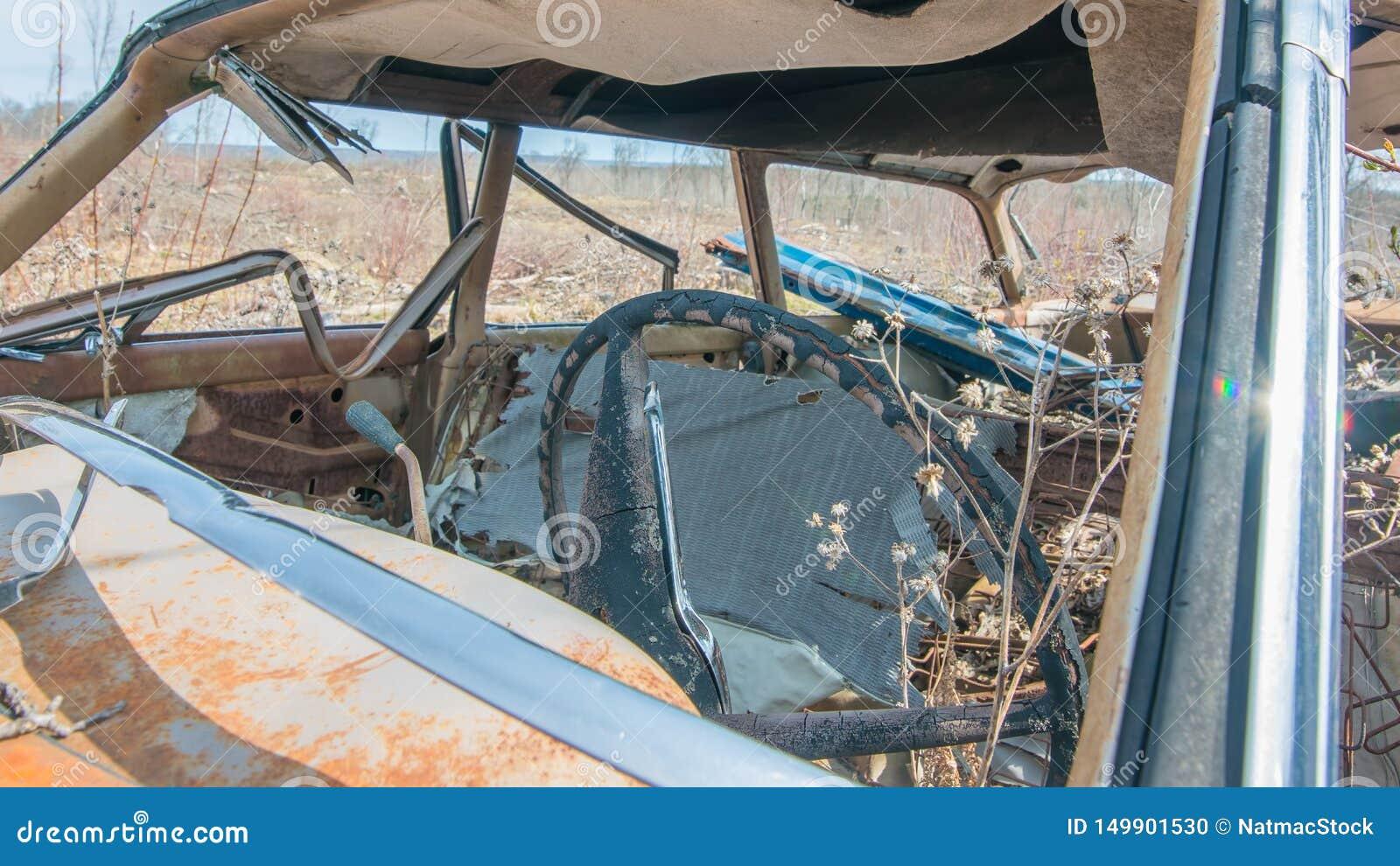 老葡萄酒生锈了汽车在没有中间省略威斯康辛森林-被暴露的地方在采伐森林以后-生长的植物在汽车