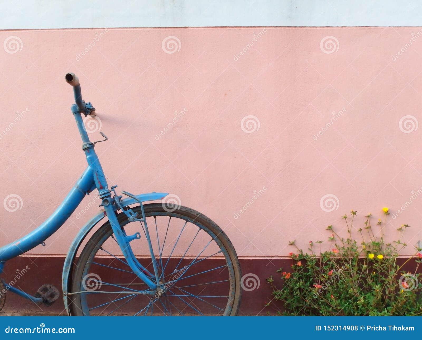 老蓝色自行车和花在桃红色墙壁前面