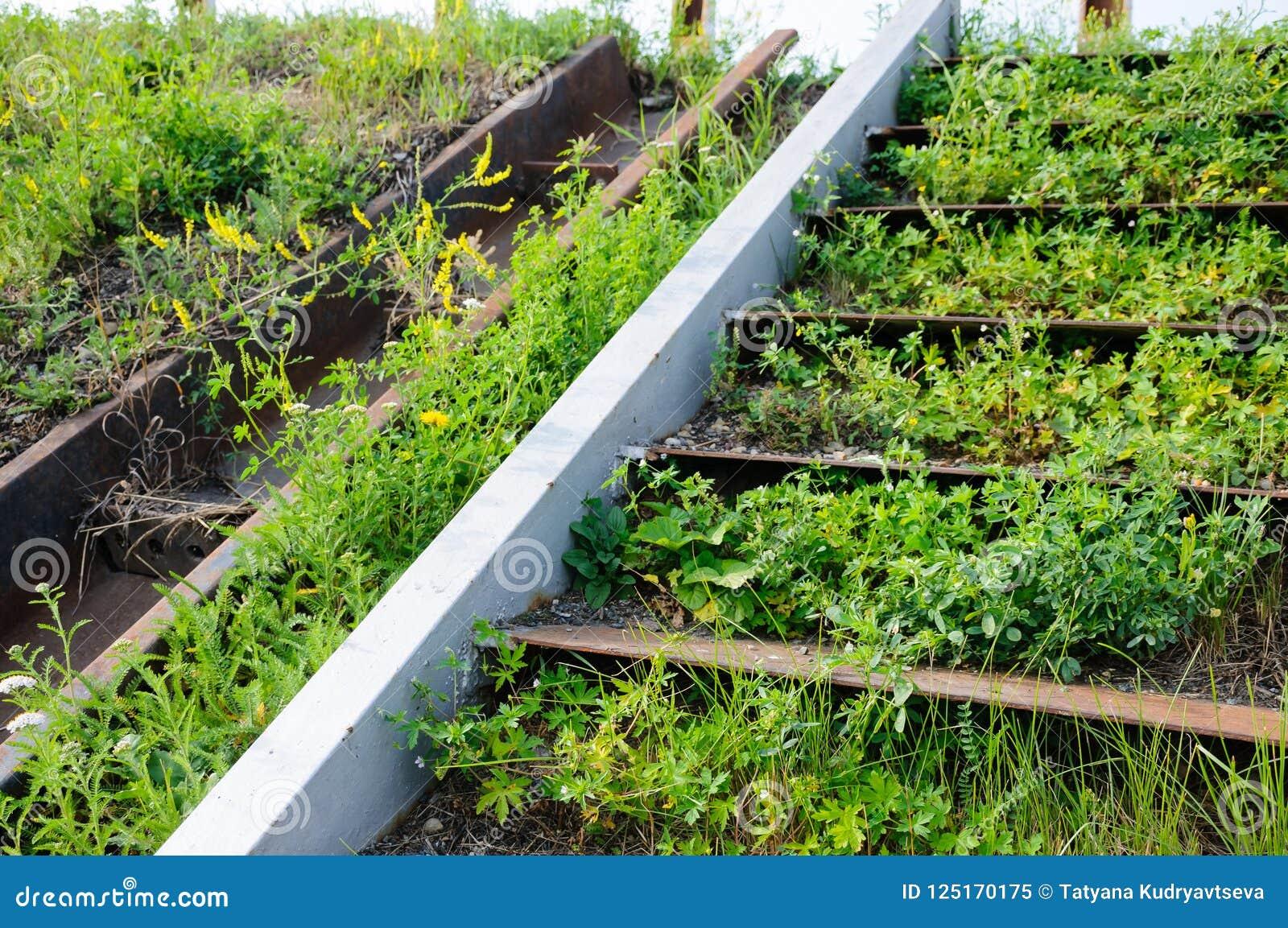 老被放弃的生锈的钢台阶长满与草