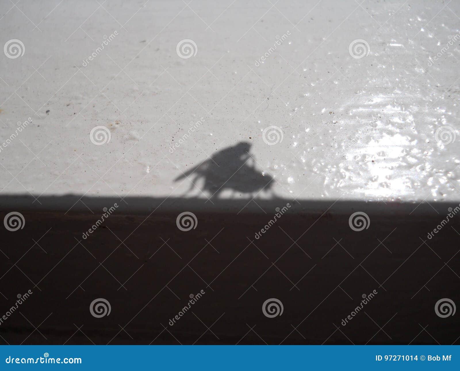 联接的flys的阴影