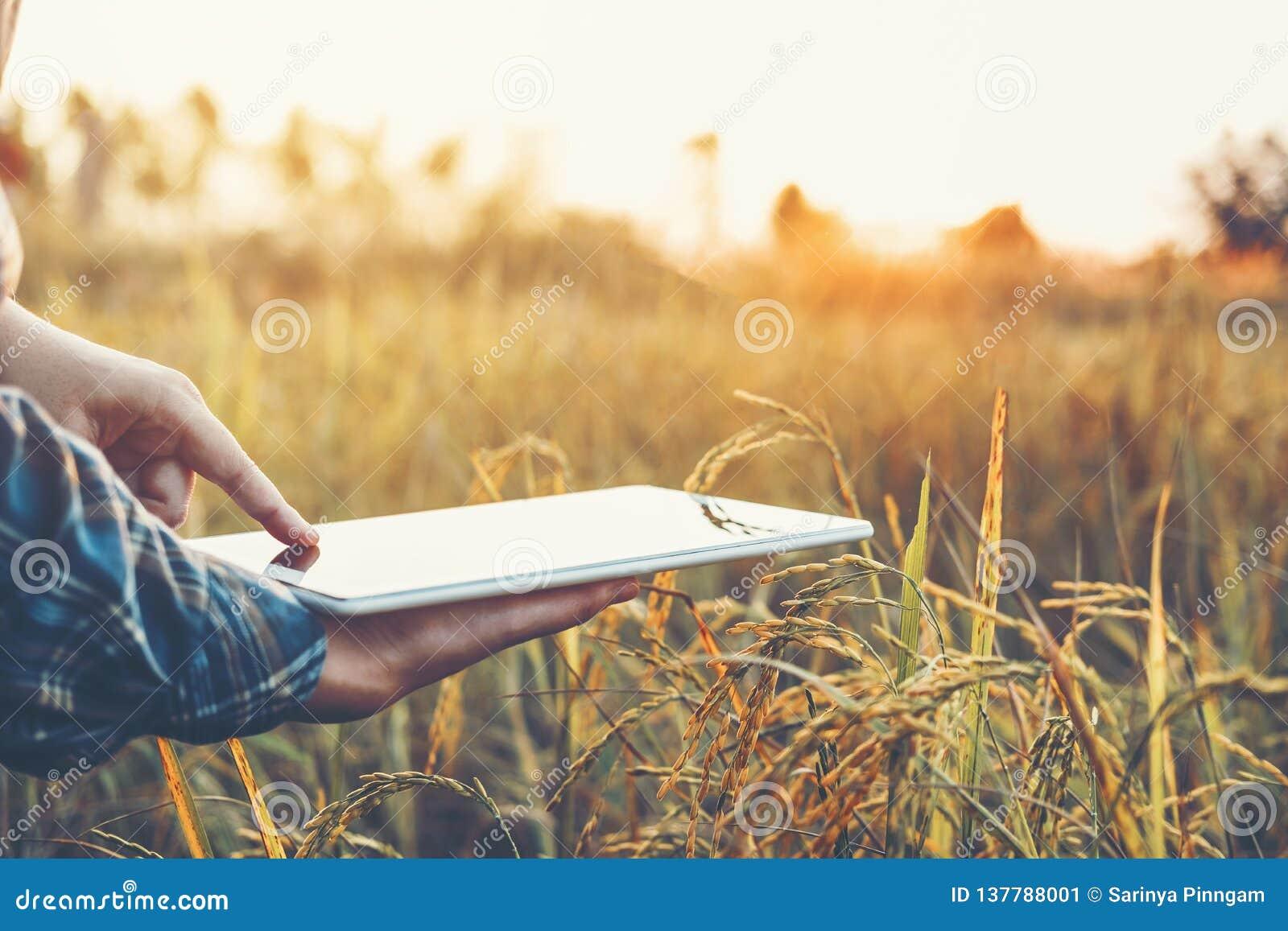 聪明的种田的农业技术和使用研究片剂的有机农业妇女和学习米的发展