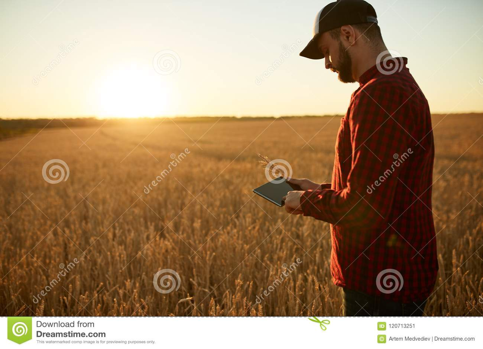 聪明种田使用在农业的现代技术 供以人员有数字式片剂计算机的农艺师农夫在麦子