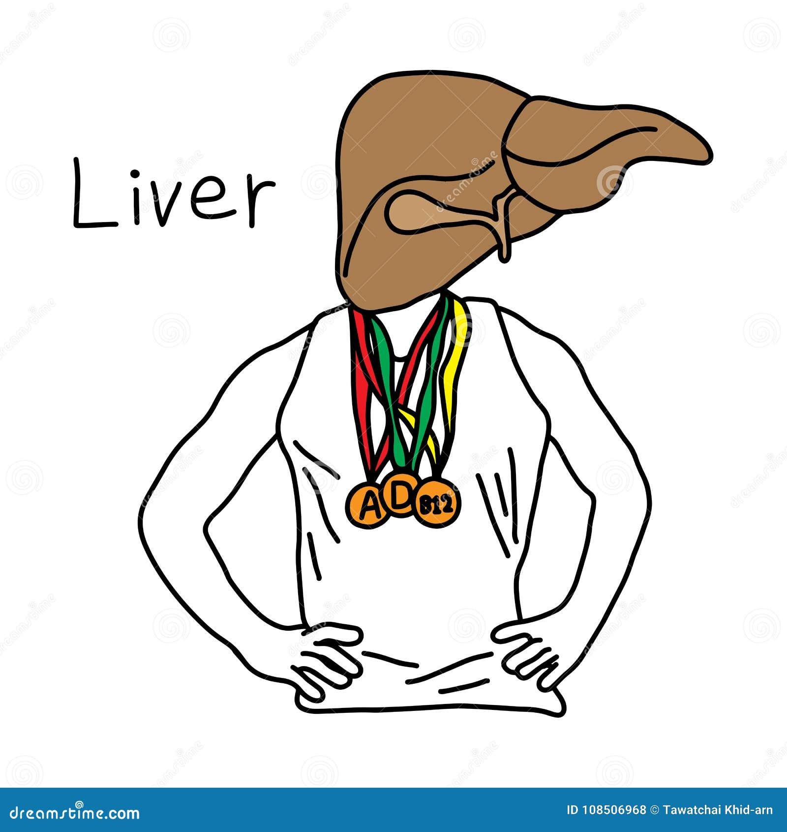 肝脏的隐喻作用对肝脏商店维生素A、D和B12的