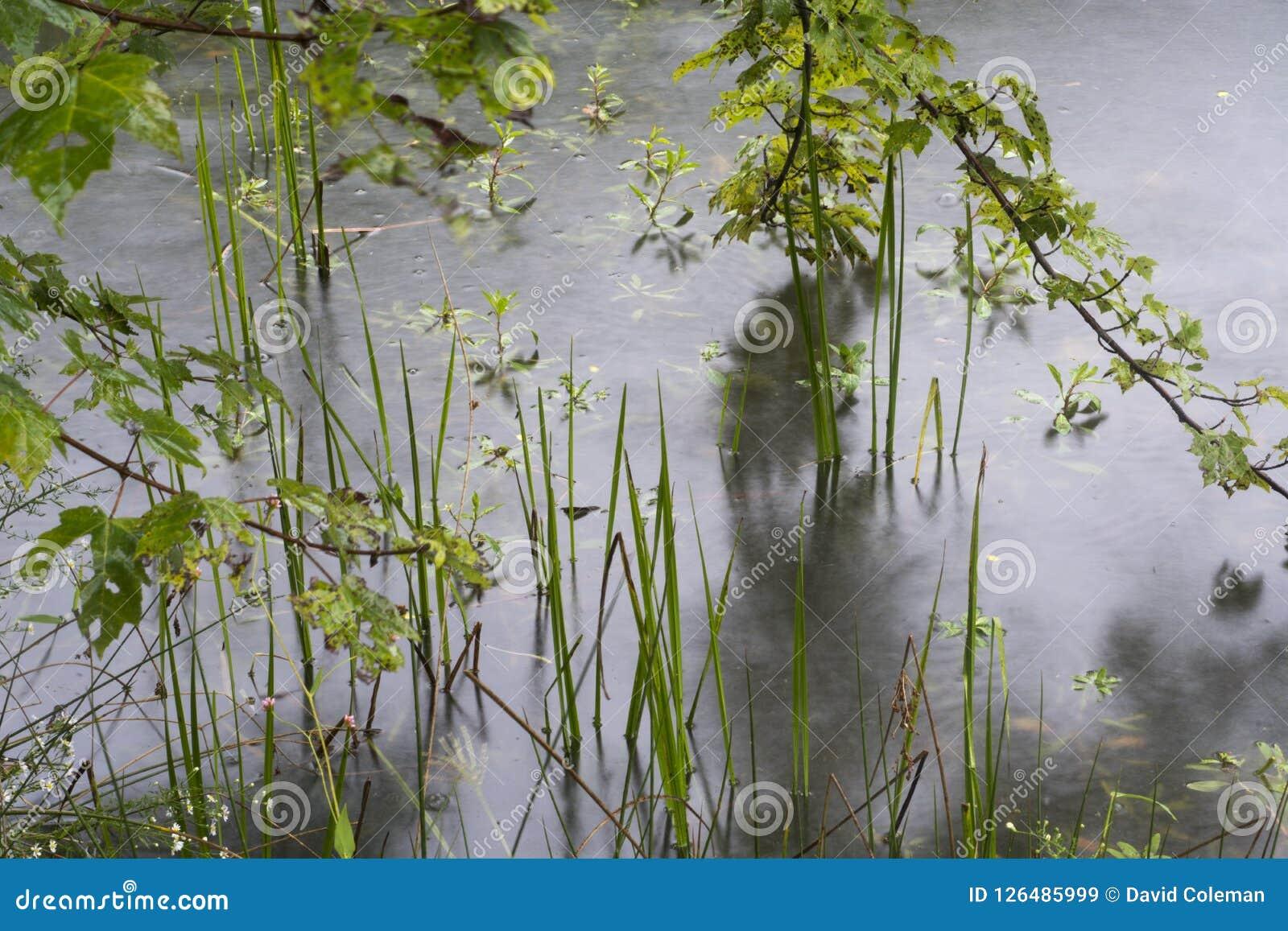 肢体池塘和叶子