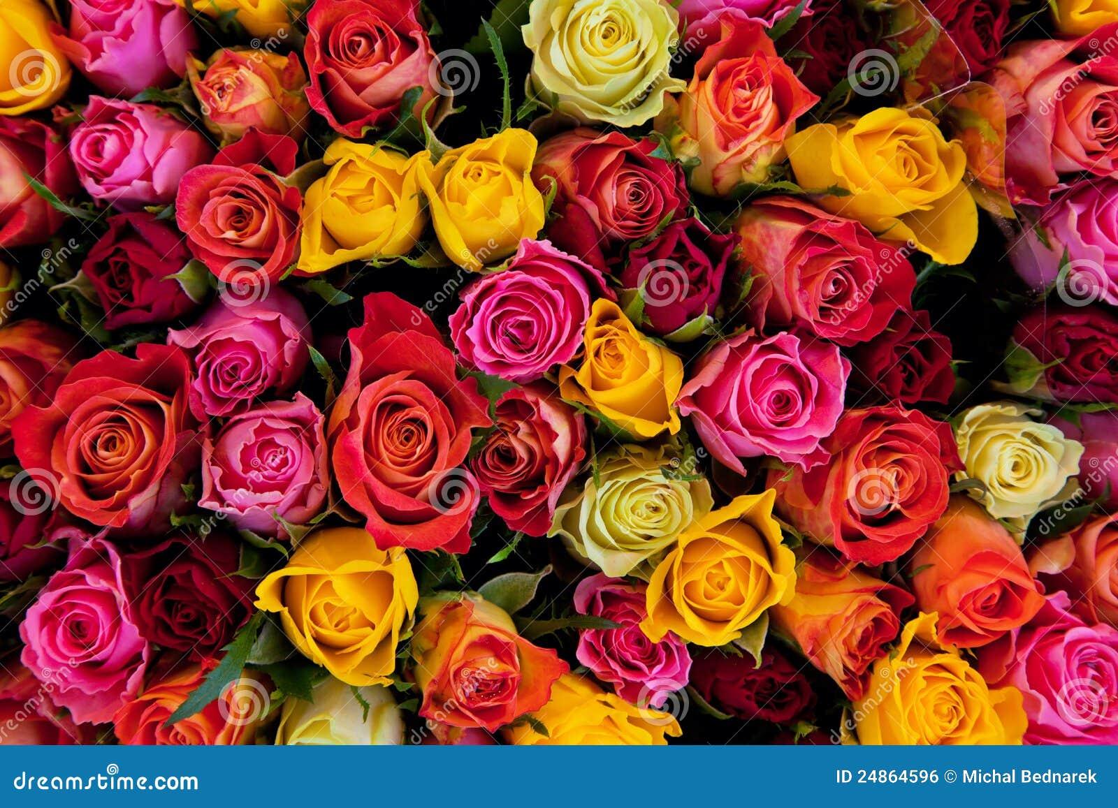 背景五颜六色的玫瑰