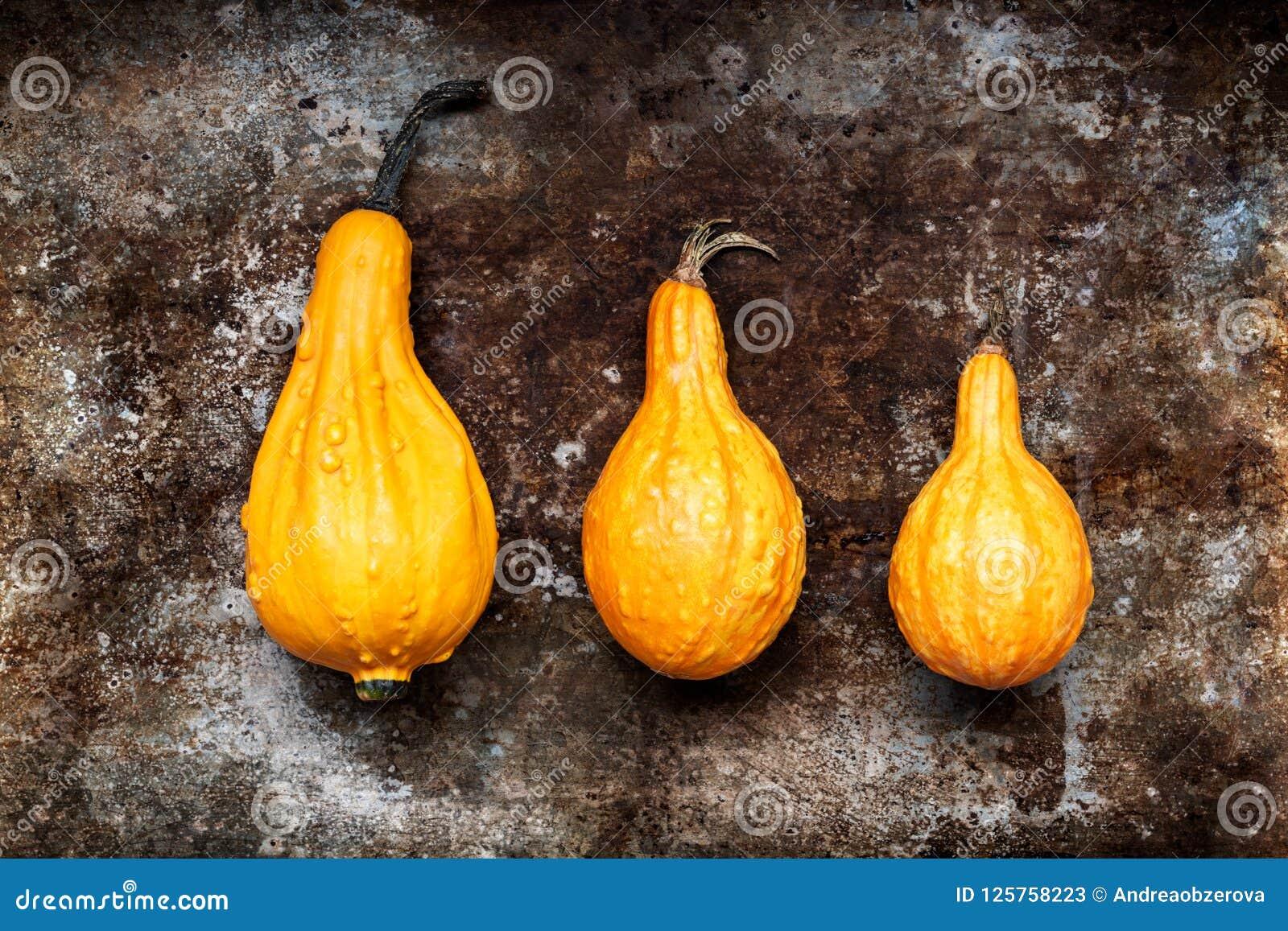 背景愉快的感恩 在土气金属背景的三个橙色南瓜与拷贝空间 秋天收获