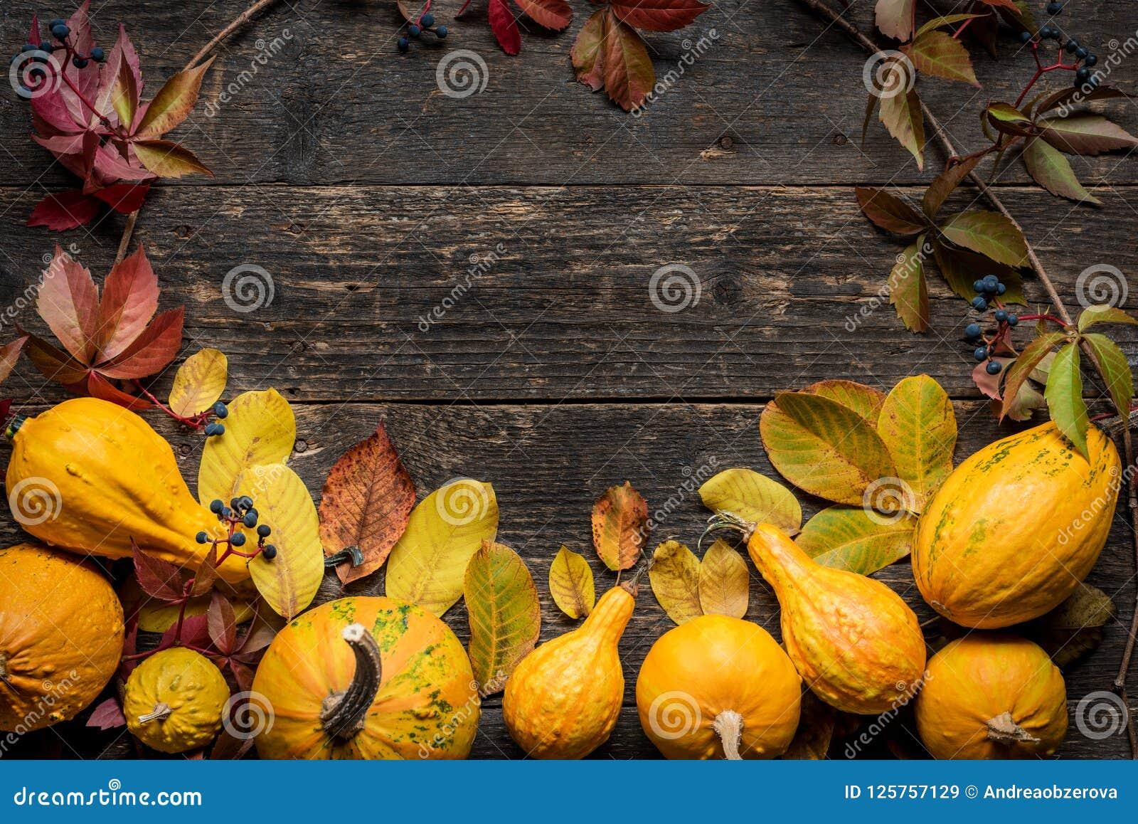 背景愉快的感恩 秋天收获和假日边界 各种各样的南瓜的选择在黑暗的木背景的
