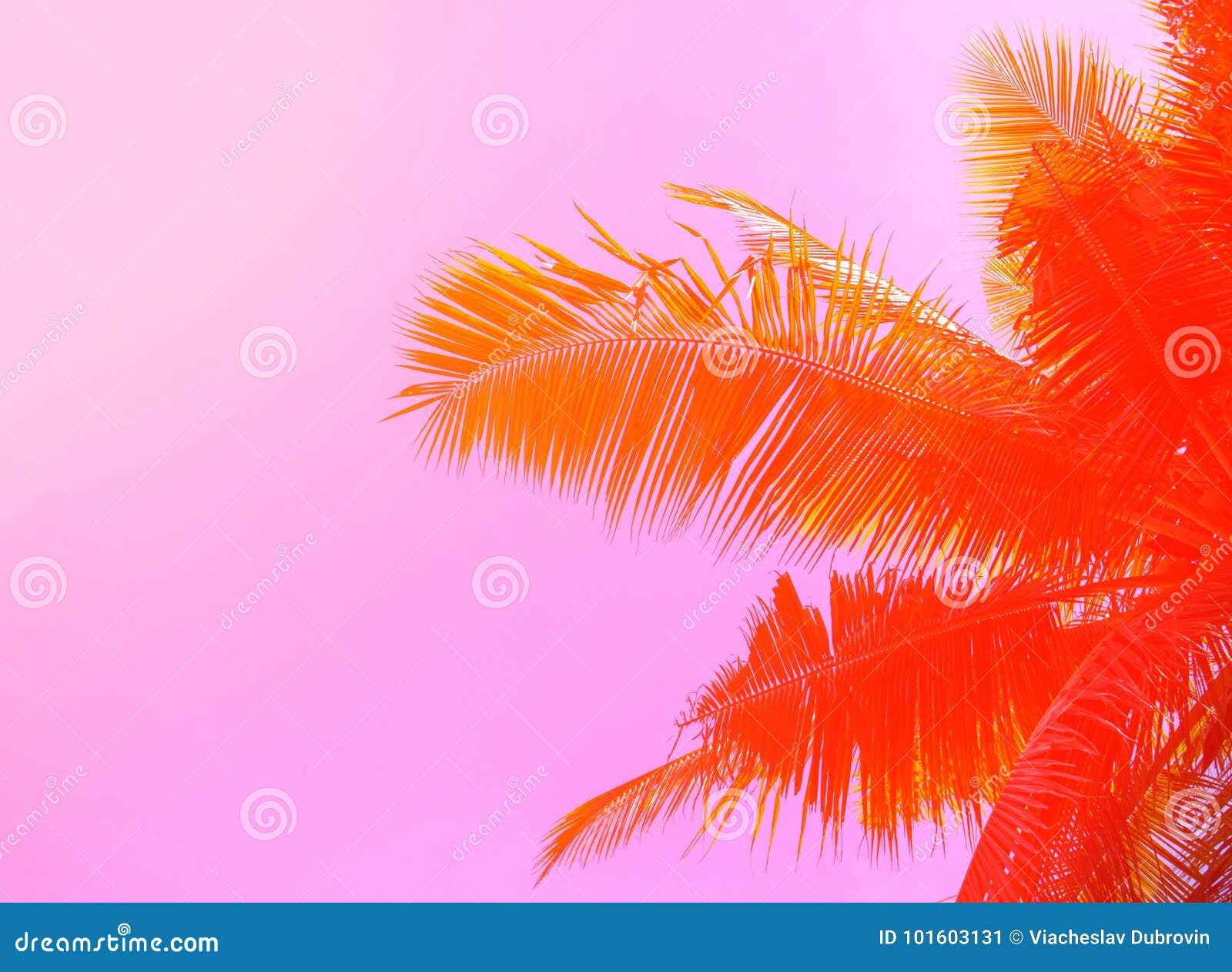 背景掌上型计算机天空结构树 棕榈叶装饰品 桃红色和橙色被定调子的照片