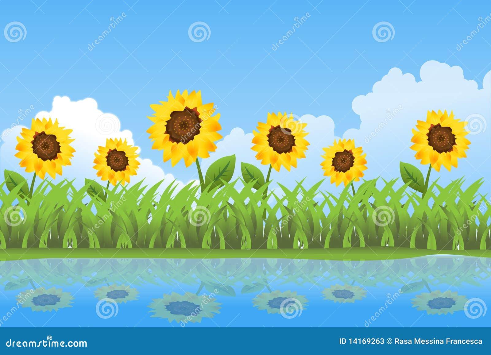 背景日夏天向日葵