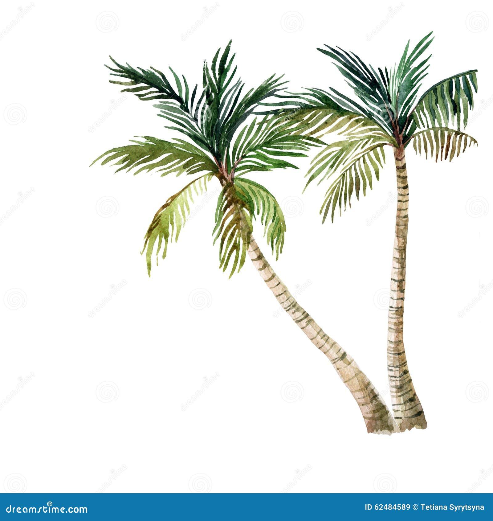 背景查出的棕榈树白色 水彩