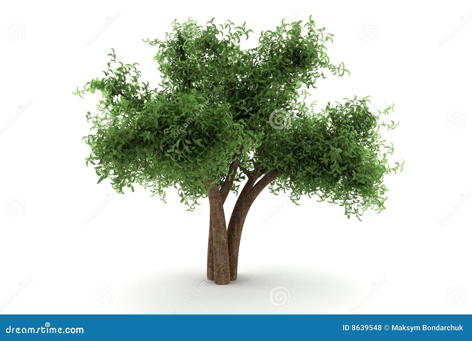 背景查出的结构树白色