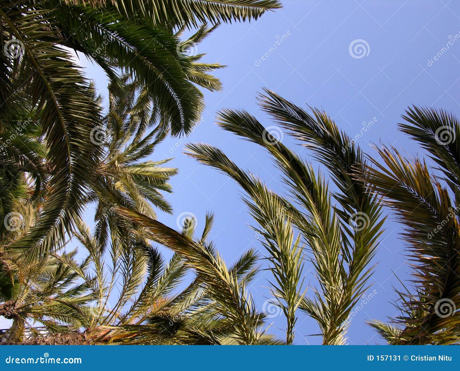背景棕榈树