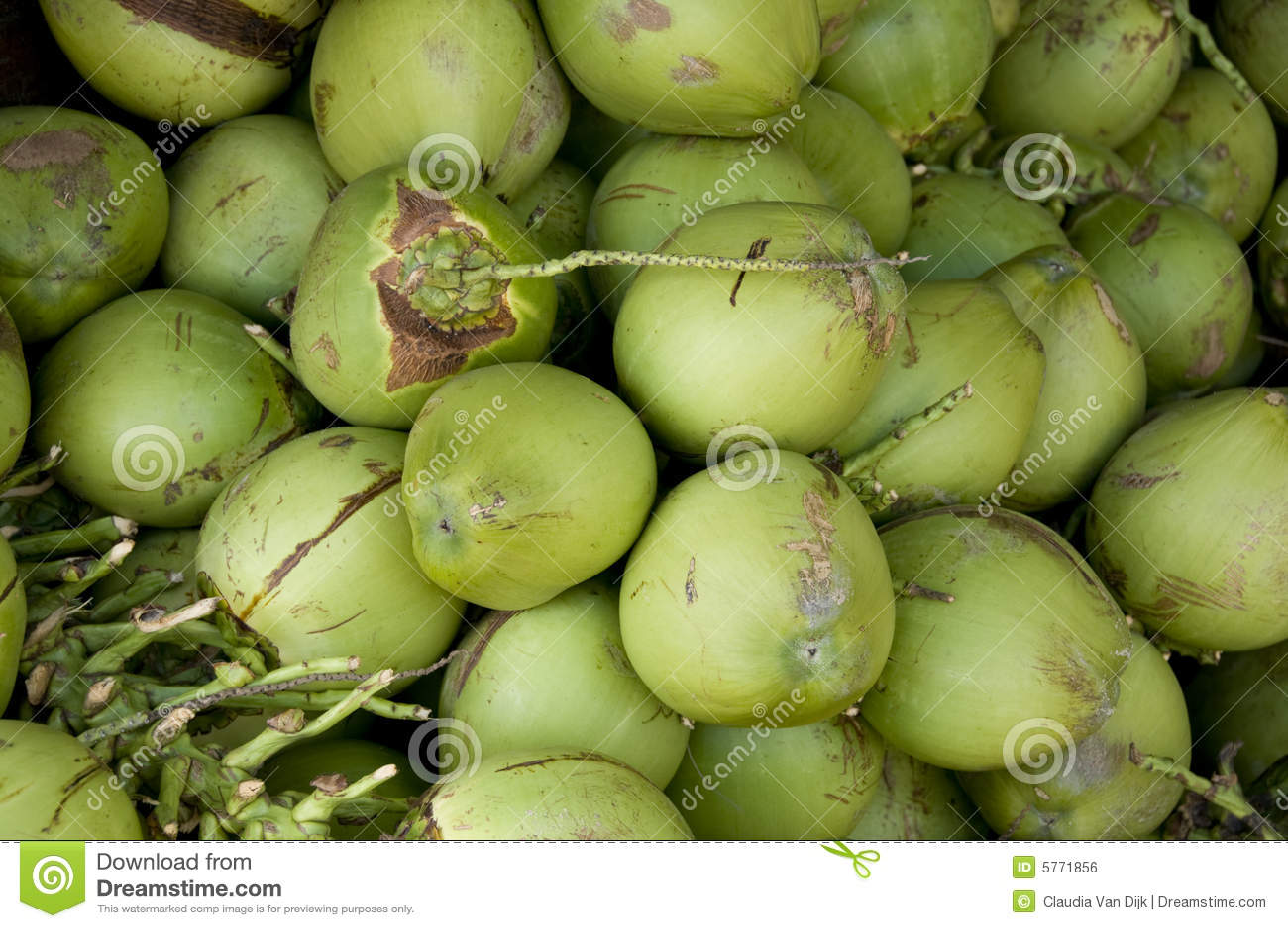 背景椰子绿色