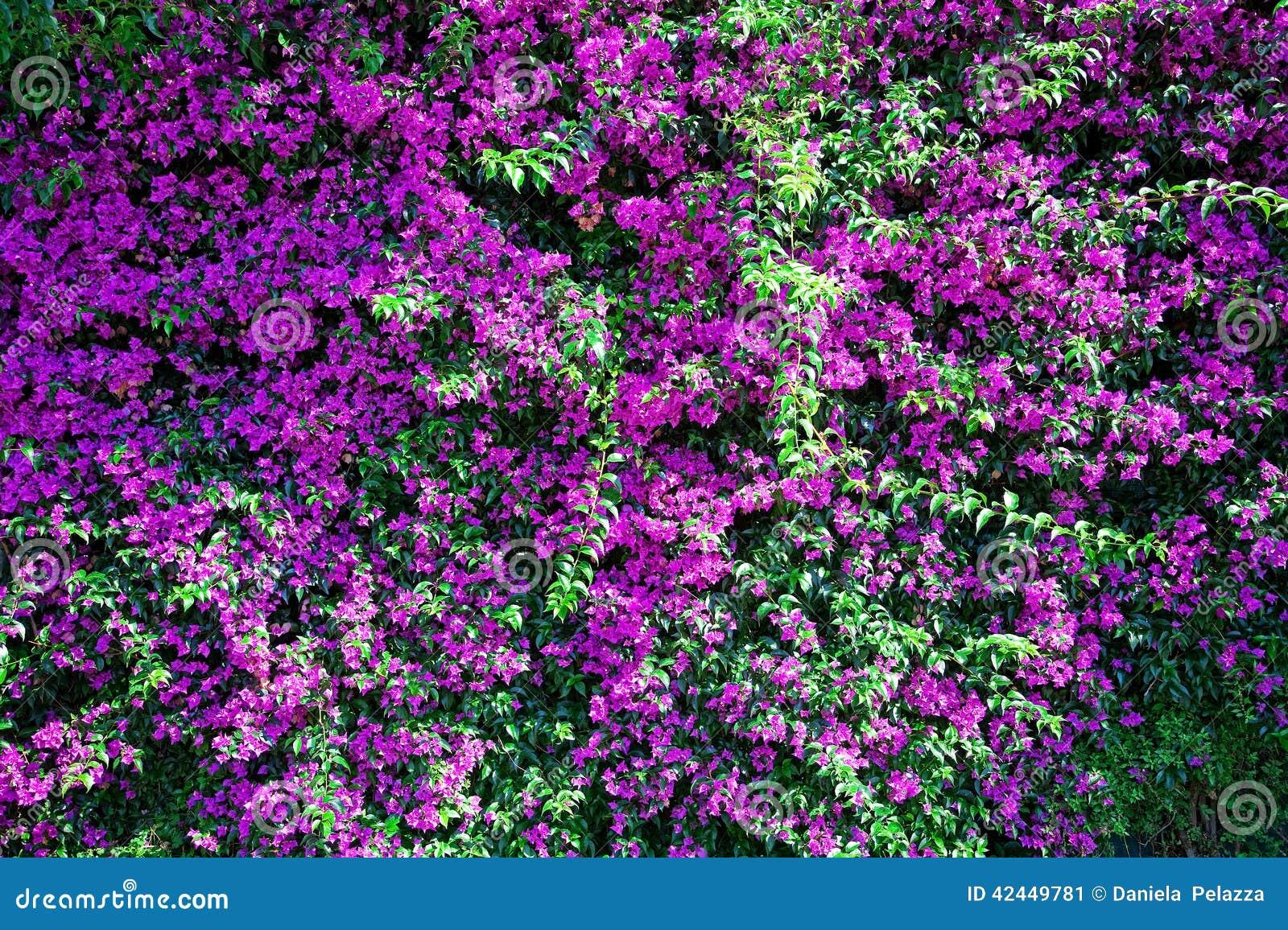 背景横幅开花表单少许桃红色螺旋