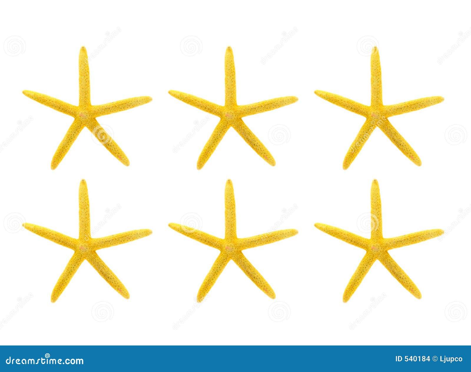 Download 背景海星空白黄色 库存照片. 图片 包括有 无脊椎, 烘干, 海鲜, 火箭筒, 生物, 珊瑚, 软体动物, 存在 - 540184