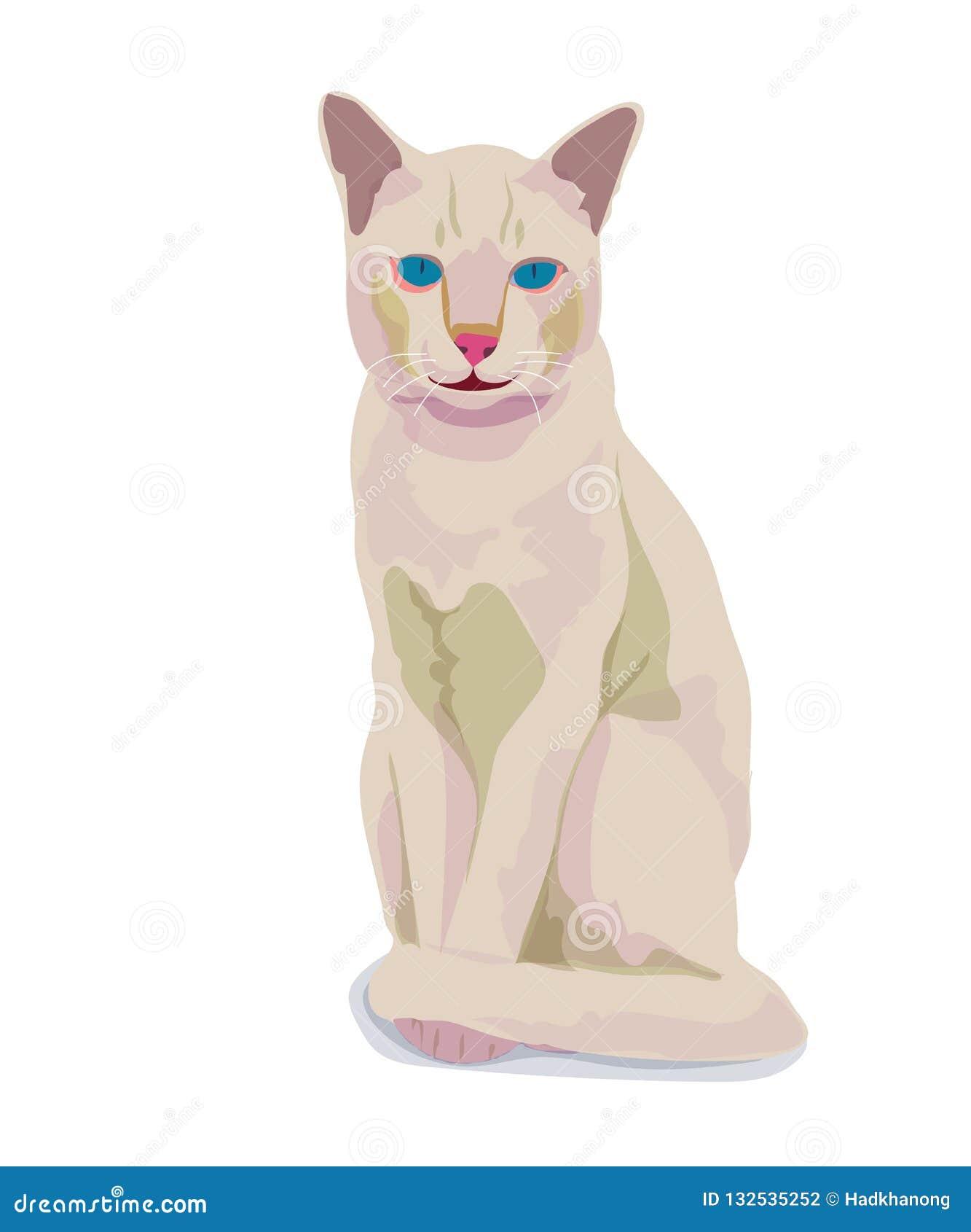 背景猫查出的白色