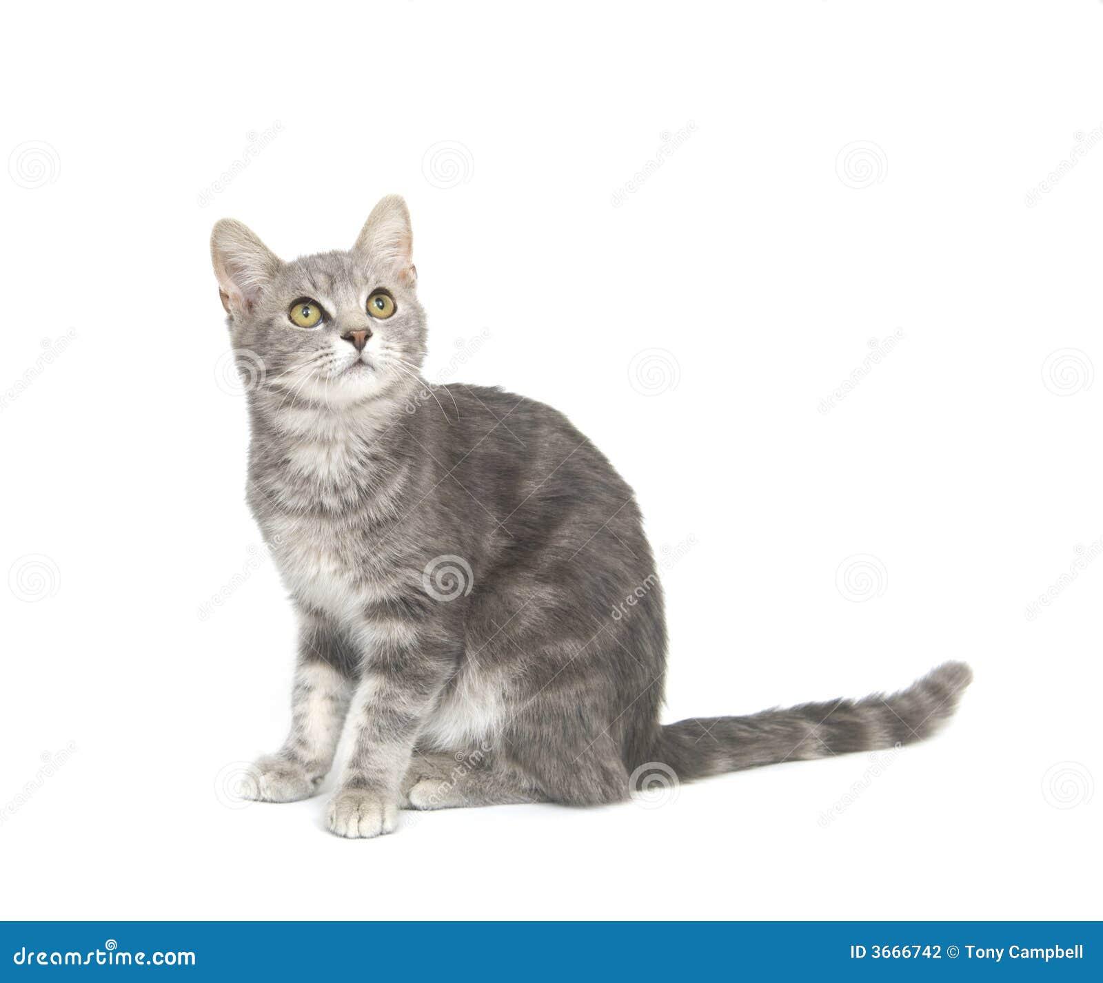 背景猫灰色白色