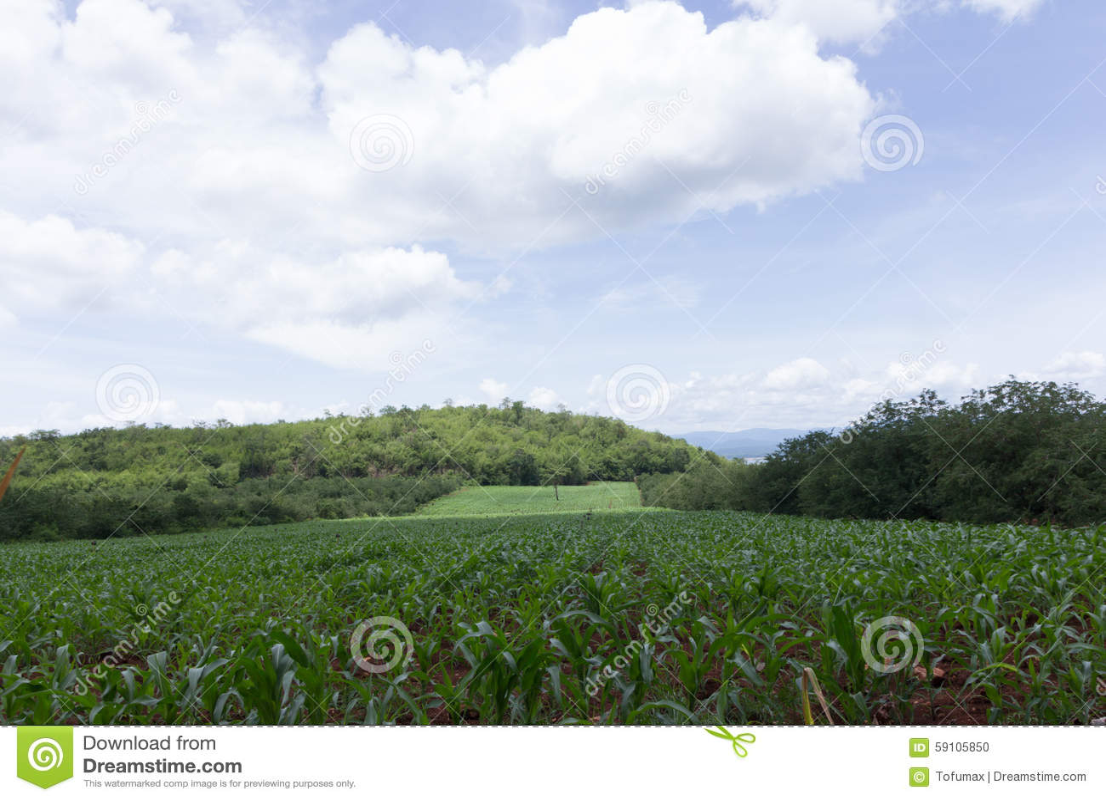 背景玉米夜间域小山