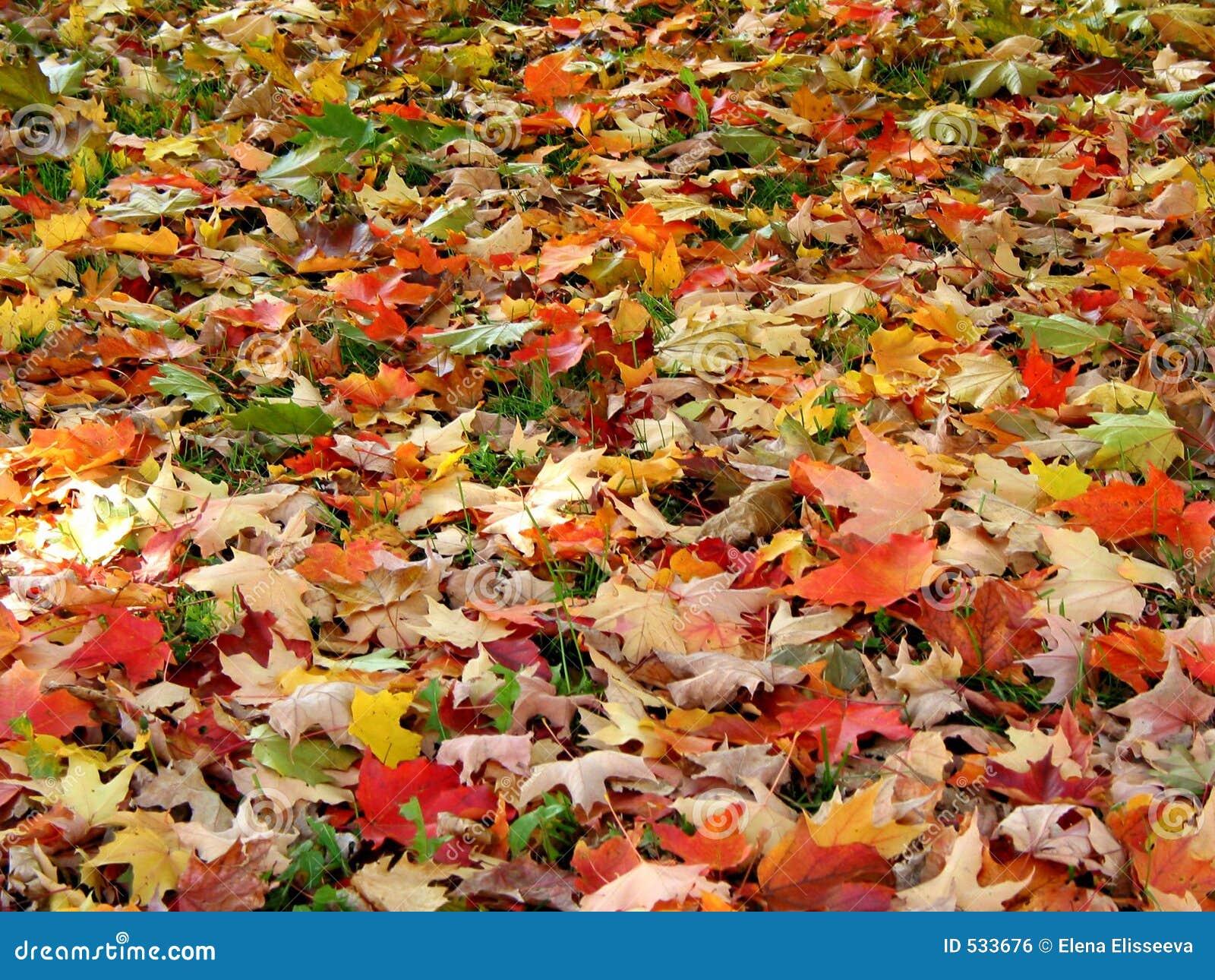 Download 背景秋天叶子 库存照片. 图片 包括有 槭树, 叶子, 季节, 橙色, 陆运, 背包, 纹理, 背包徒步旅行者 - 533676